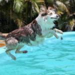 Protetto: Come aiutare il nostro cane ad affrontare il caldo estivo
