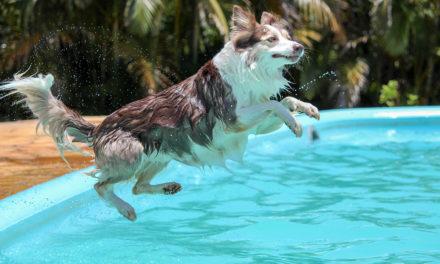 Come aiutare il nostro cane ad affrontare il caldo estivo