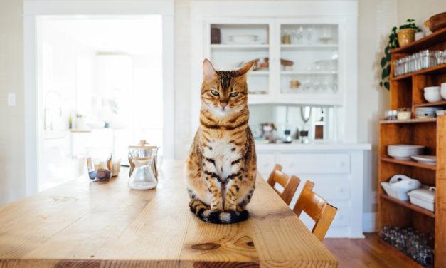 Alimentazione per il gatto: umida o secca?