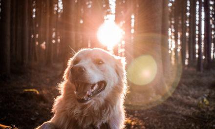 La giornata mondiale del cane 2019
