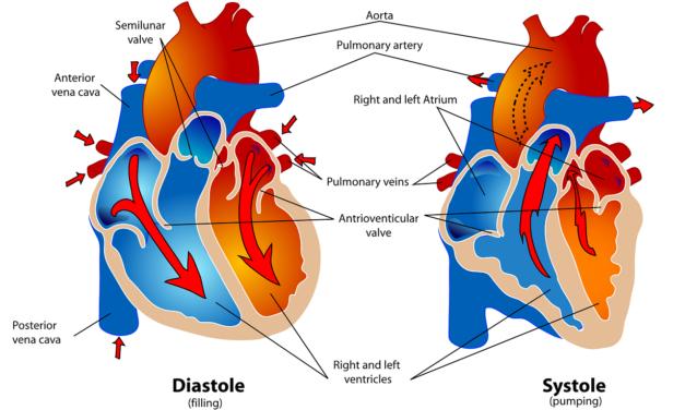 La campagna prevenzione cardiovascolare<br>della Parafarmacia Rabottini